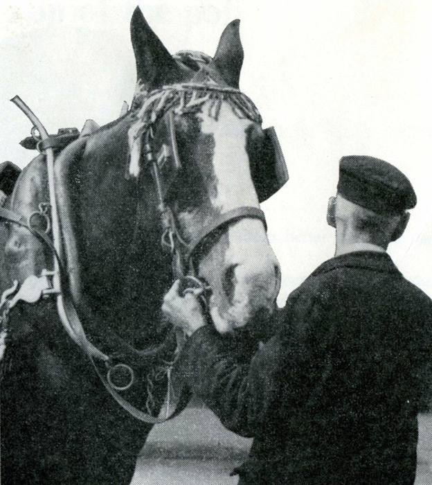 The last lawley street freight shunting horses retire, 1961