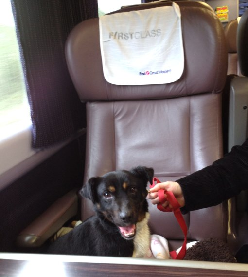 2) Dog on train with lead. Courtesy of Phil Marsh