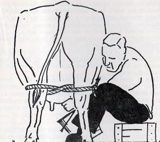 7) How to milk a cow. Courtesy of Phil Marsh